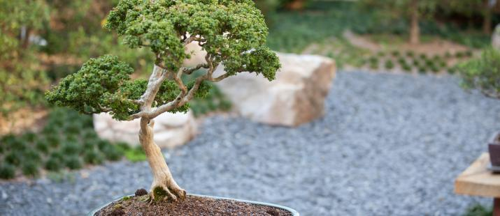 via trappist.net/garden-center-bonsai